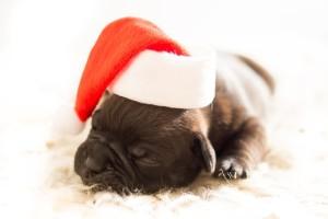 puppy-583415_640